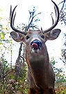 Hello down there - White-tailed Deer by Jim Cumming