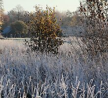 Farmstead in first frost day in autumn by Antanas