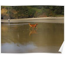 Young Red.....reflecting,...Florence, Oregon Poster