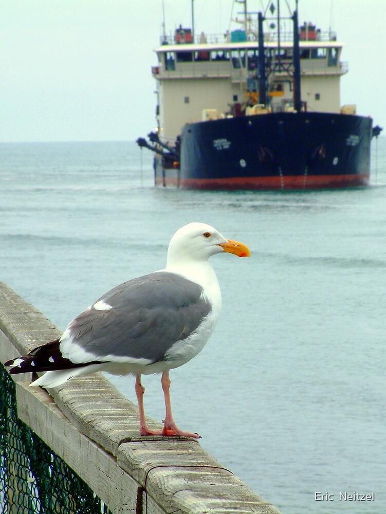 Gull Dredger by Eric  Neitzel
