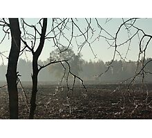 First frost on tree branches Photographic Print