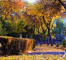 Autumn  colors by Geta