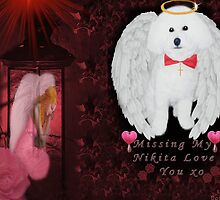 "ⓛ ⓞ ⓥ ⓔ.♥➷♥•*Dedication To My Baby Nikita* ""Oh How I Miss U XO* ""Dogs are miracles with paws.""ⓛ ⓞ ⓥ ⓔ.♥➷♥•* by ✿✿ Bonita ✿✿ ђєℓℓσ"