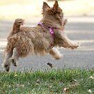 Joy is Jumping for a Ball by susan stone