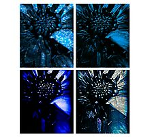 My Special Blue Mums Variety Photographic Print