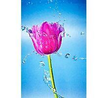 Tulip Flower Photographic Print