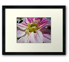 Flowers for the Breast Cancer  Framed Print