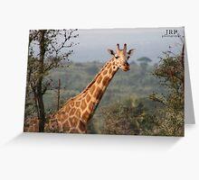 Scarred Giraffe Greeting Card