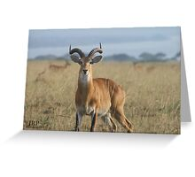 Power in Animal Greeting Card