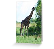 Reaching Giraffe Greeting Card