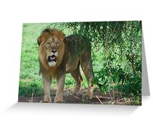 Lion in the Shade Greeting Card