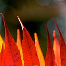 autumn flames by yvesrossetti
