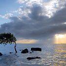The Bent Little Tree, Deception Bay Qld Australia by Beth  Wode