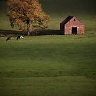 A Derbyshire Barn by geoff curtis