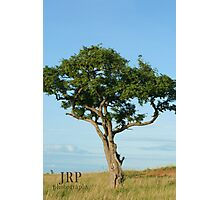 Tree in Uganda Photographic Print