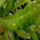 wet leaf by Johnathan Bellamy