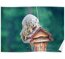 Squirrel Eating in the Rain Poster