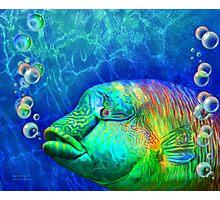Parrotfish - Rainbow Spirit Photographic Print