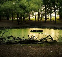 Green pond at Richmond Park by ClaudineCook