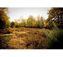 Wimbledon Common Autumn scenery Photographic Print