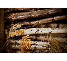Wood for winter time. Photographic Print