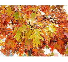Autumn bouquet of leaves, New York City  Photographic Print