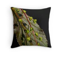 acer davidii rosalie Throw Pillow