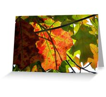 Autumn Collage, New York City Greeting Card