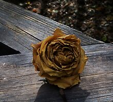 Twilight Rose by Barry Doherty