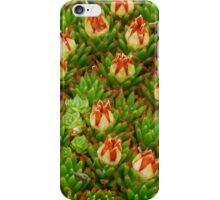 Tasmanian Cushion Plant in flower iPhone Case/Skin