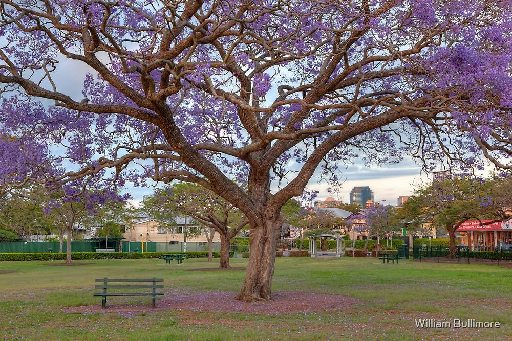 New Farm Park • Brisbane • Queensland by William Bullimore