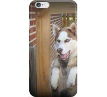 Alaskan Husky iPhone Case/Skin