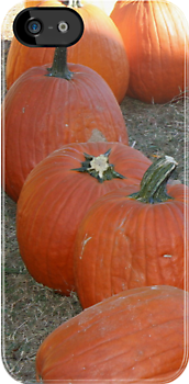Pumpkin Patch by DebbieCHayes