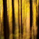 Dark silhouettes in the golden forest by Patrick Morand