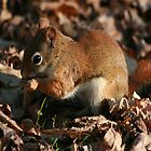 Red Squirrel by eaglewatcher4
