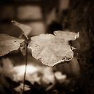single 2 by redhairedgirl