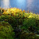 Moss over the water by Yonmei