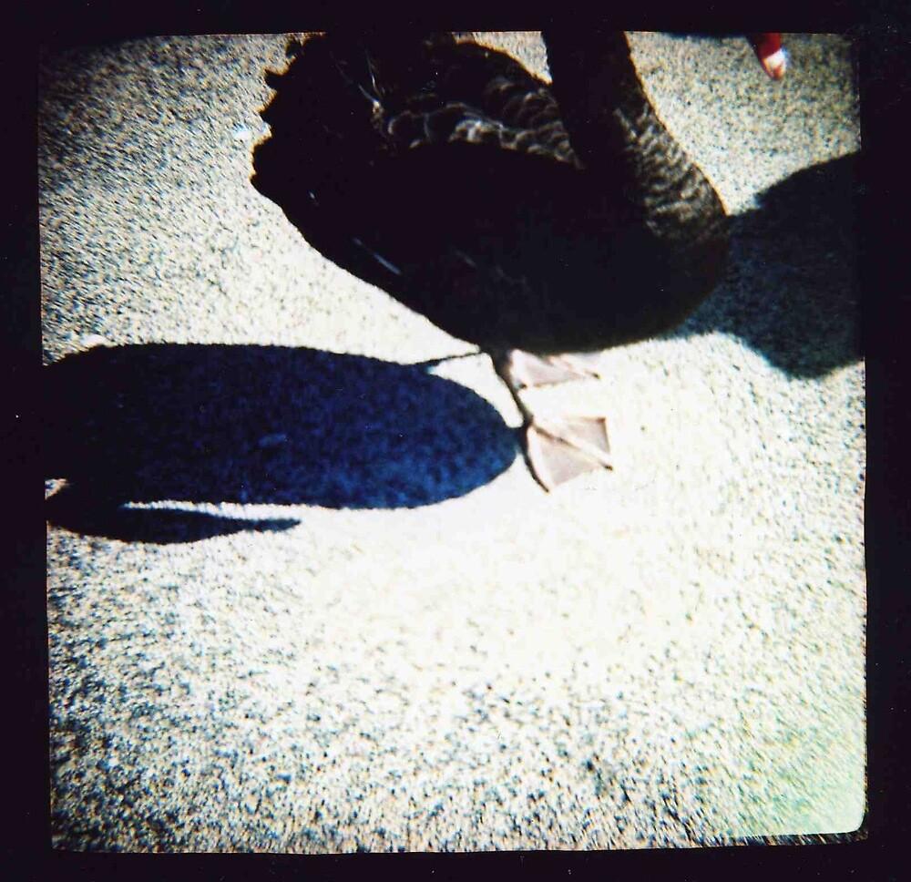 black swan shadow by Sally McColl