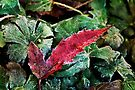 Fall Frost by KBritt