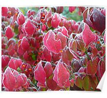 Frosted and Frozen Burning Bush Poster