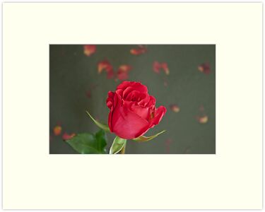 Reddish Rose On Petal Background by Sandra Foster