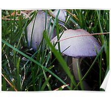 Lil Mushrooms Poster