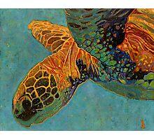 Turtle #1 Photographic Print