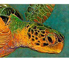 Turtle #2 Photographic Print