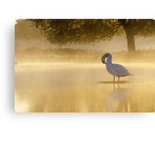 Morning Preen Canvas Print