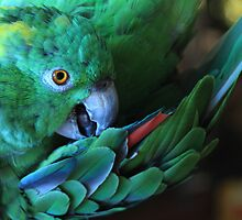 Colorful Parrot by Dreebs