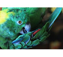 Colorful Parrot Photographic Print