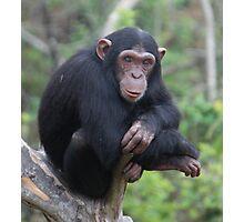 Chimp Eden II Photographic Print