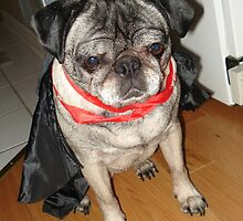Count Pug by amandaford