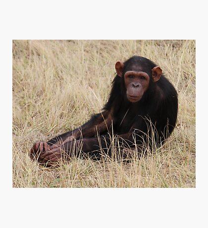 Chimp Eden III Photographic Print
